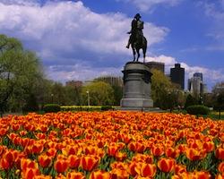 Abuso Sexual Advogado Boston MA